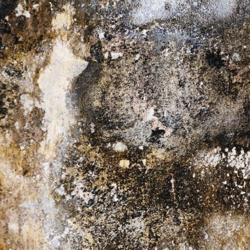4 signs that your home needs damp proofing